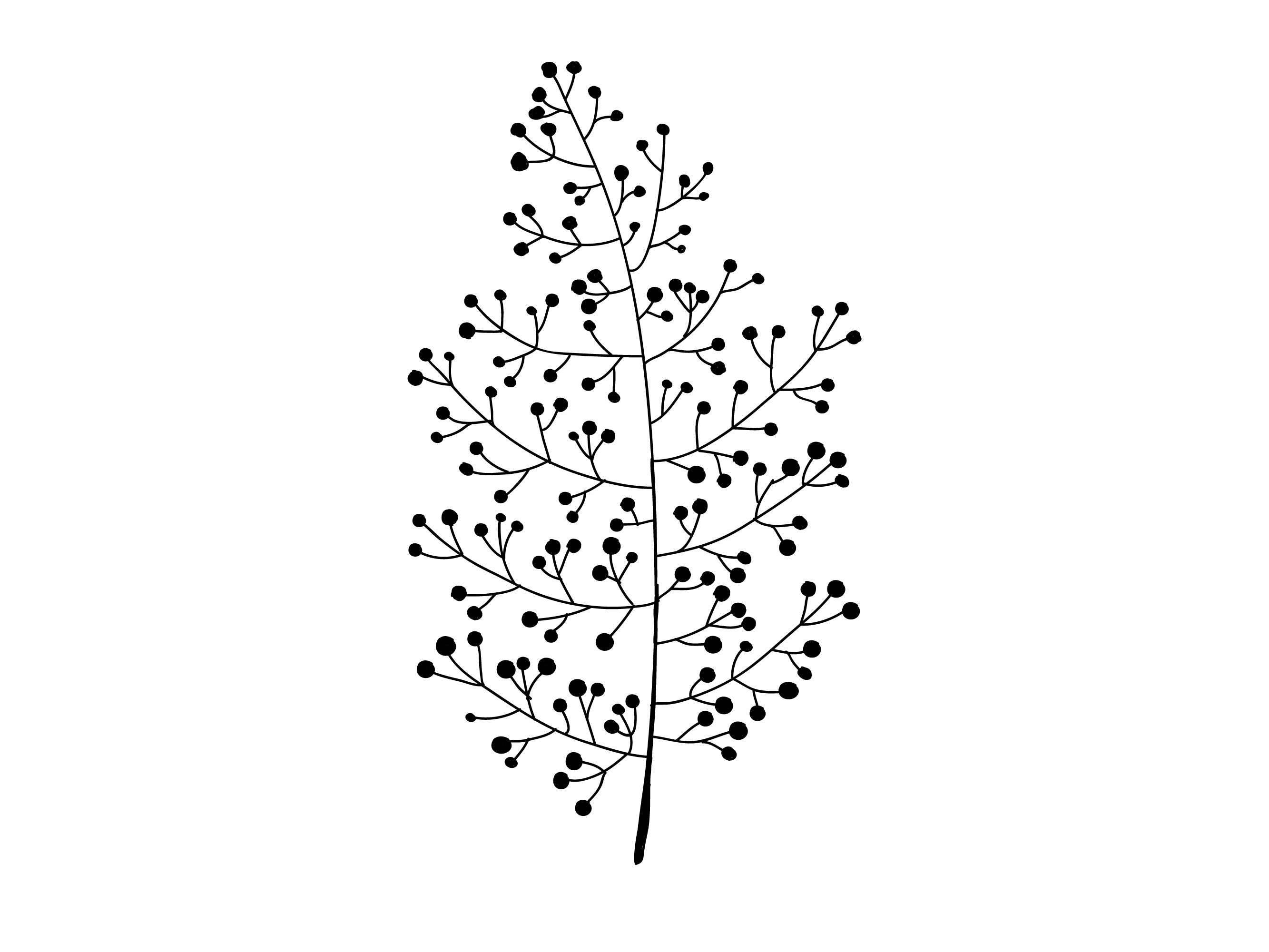 rama-negro